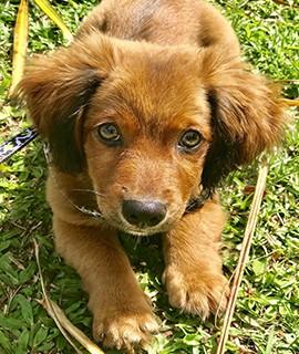 Aspriter Dog